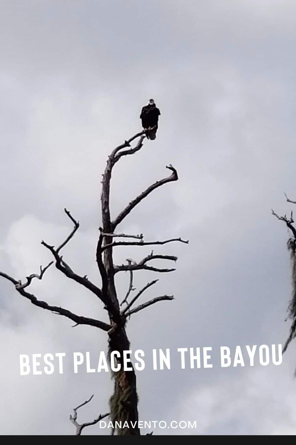 Eagle Swamp Tour in Bayou Country