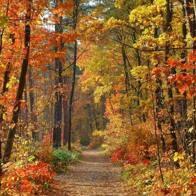 Fall Leaves changing for fabulous Fall products you cant live without